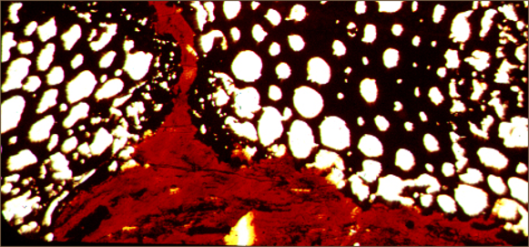 : By heating coal separately while viewing them through a microscope, we find the black cellular material (fusinite) rem