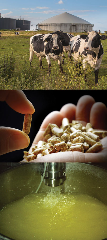 digestor, wood pellets, and lard