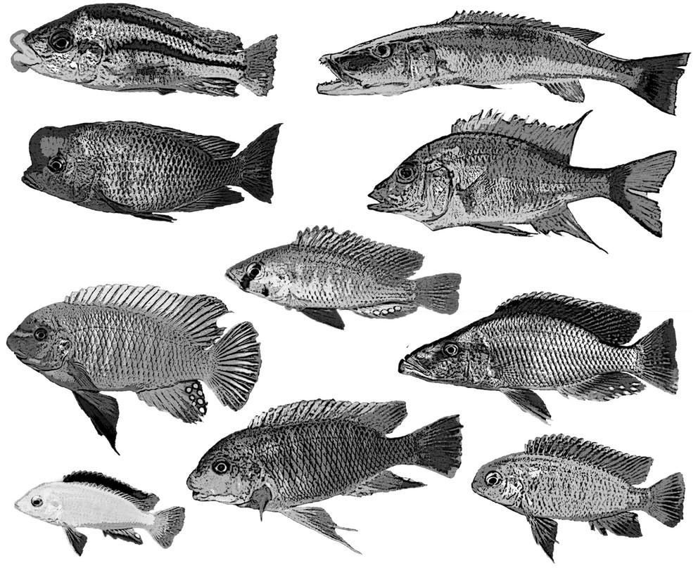 Photo of multiple kinds of fish
